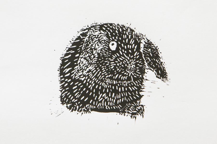 55. Zoe Webb, 'Cottontail the Rabbit', Yr 7, Presbyterian Ladies' College, Armidale